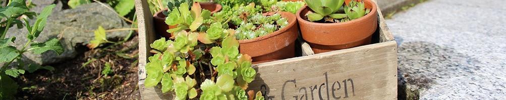 Découvrez notre sélection d'objets et déco pour terrasse et jardin.